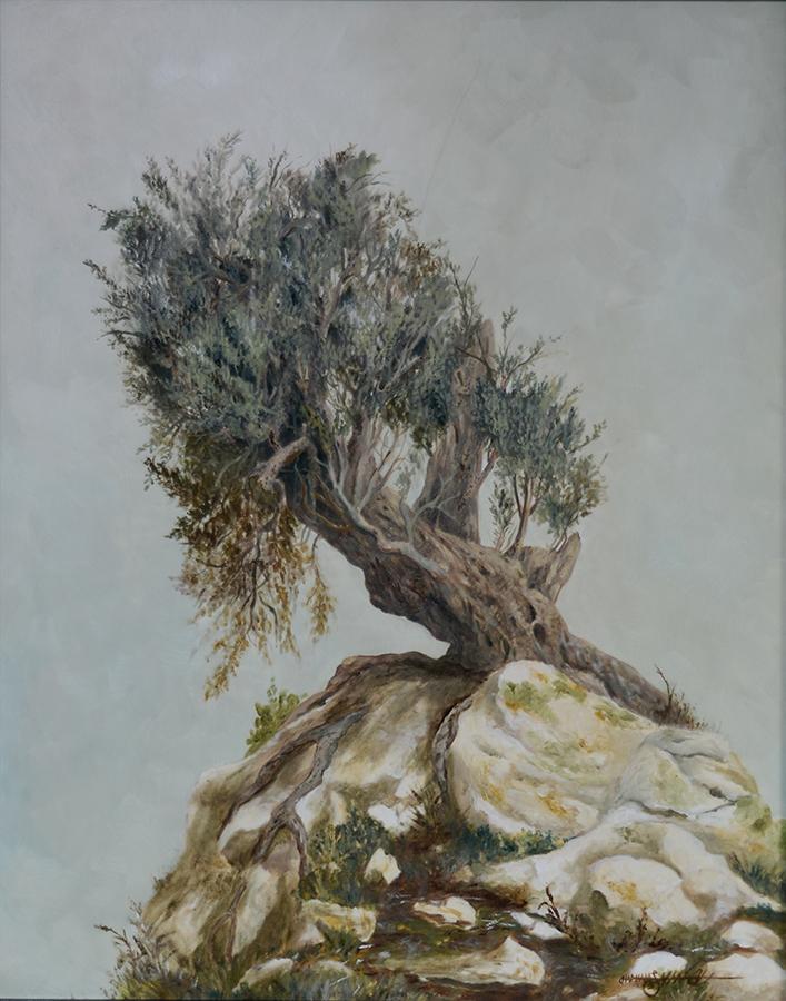 Ancient Olive Tree | Oil on Panel